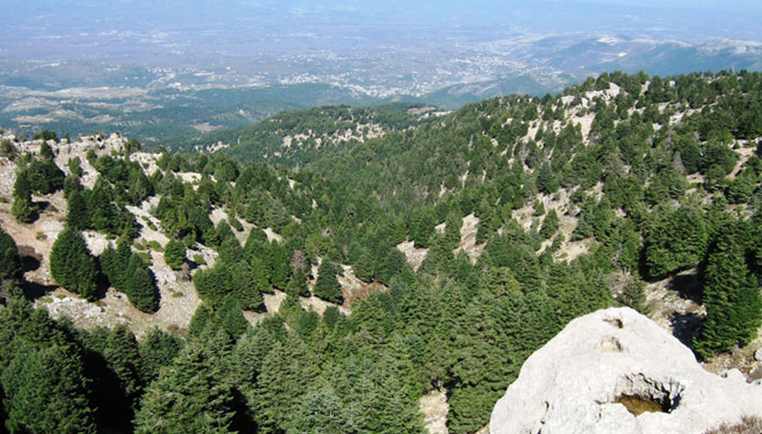 Community Engagement Action Plan to Sustain and Expand the Reforested Sites Across Lebanon