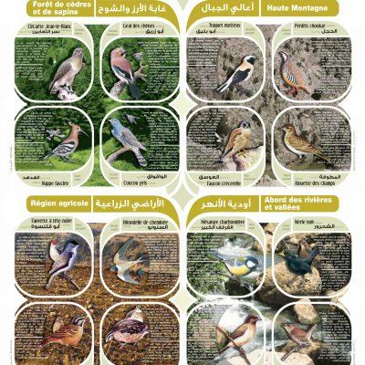 """BIRDS"" Poster - 2007"