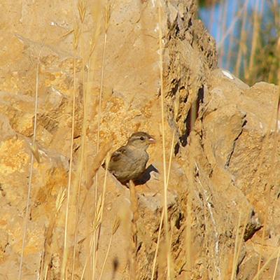 Avifauna Assessment in Upper Akkar-Donnieh