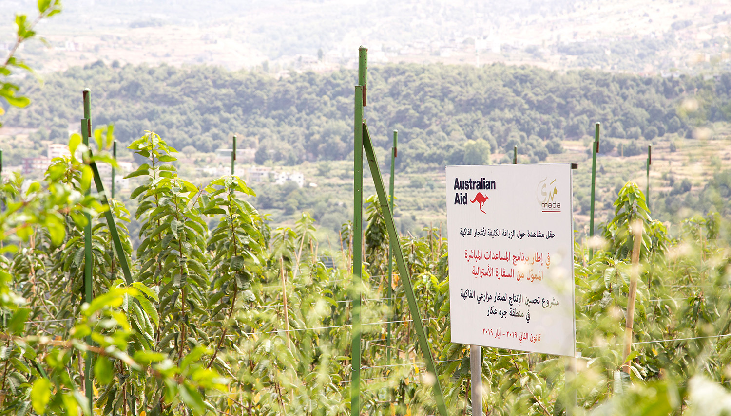 Improves Production for Small-Scale Fruit Growers in Akkar Highlands